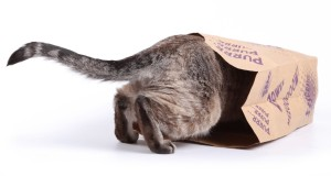 The Don't Comply Show - Cat Paper Bags